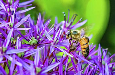Photograph - Promising Purple 5 by Steve Harrington