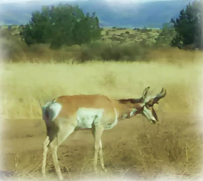 Painting - Pronghorn Antelope Arizona - Painted by Ericamaxine Price
