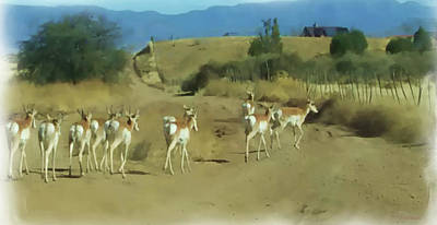 Painting - Pronghorn Antelope Herd Arizona - Painted by Ericamaxine Price