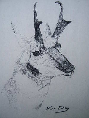 Pronghorn Antelope Art Print by Ken Day