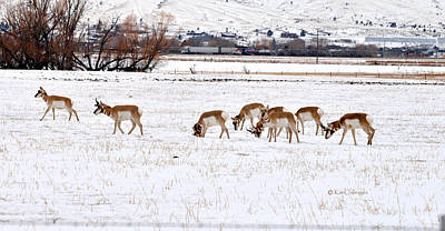 Photograph - Pronghorn In Snow by Kae Cheatham