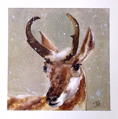 Painting - Pronghorn by June Rollins