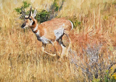 Painting - Pronghorn Near Yellowstone by Mitchell R Grosky