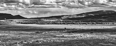 Photograph - Pronghorns An Bison - Wyoming by L O C