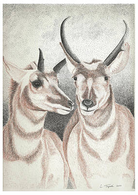 Drawing - Pronghorns by Lawrence Tripoli