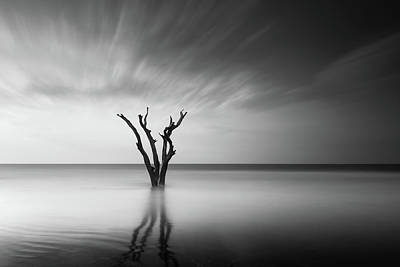 Dead Tree Photograph - Prongs by Ivo Kerssemakers
