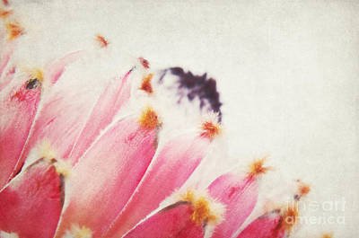 Protea Art Print by Angela Doelling AD DESIGN Photo and PhotoArt