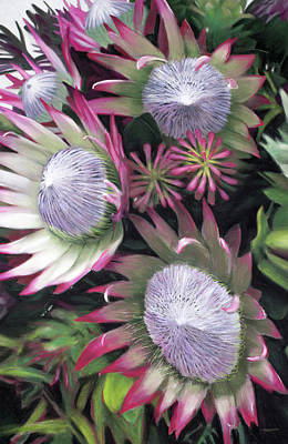 Pastel - Protea Explosion by Christopher Reid