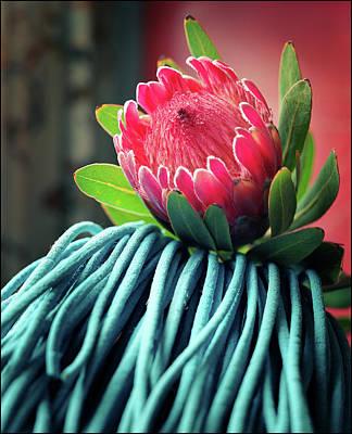 Photograph - Protea by Tim Nichols