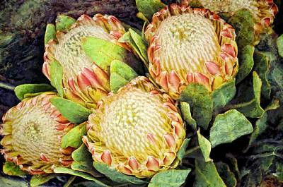 Photograph - Proteas I by Jan Amiss Photography