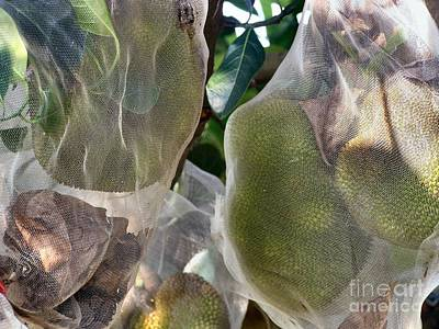 Protect Your Durian Art Print by Kathy Daxon
