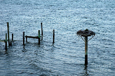 Photograph - Protected Osprey Nest by Clayton Bruster