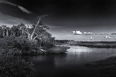 Saw Palmetto Photograph - Protected Wetland by Marvin Spates