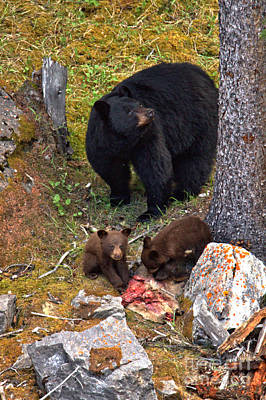 Photograph - Protecting Our Dinner by Adam Jewell
