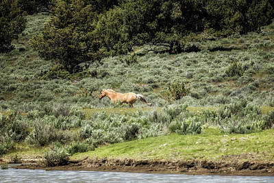 Photograph - Protecting The Rear by Belinda Greb