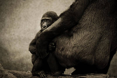 Protection Art Print by Animus  Photography