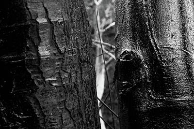 Photograph - Protection Of The Wood by Jez C Self