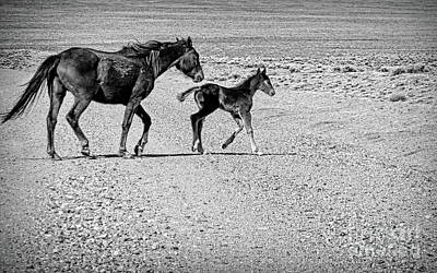 Photograph - Protective Bw by Tim Richards