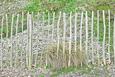 Sand Fences Photograph - Protective Fence by Tom Gowanlock