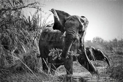 Photograph - Protective Mama Elephant Embellished In Black And White by Kay Brewer