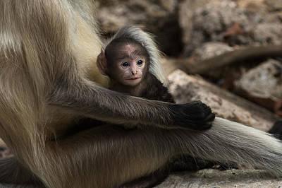 Photograph - Protectiveness by Ramabhadran Thirupattur