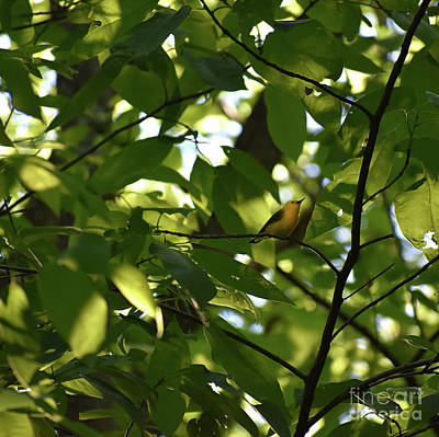 Photograph - Prothonatary Warbler by Skip Willits