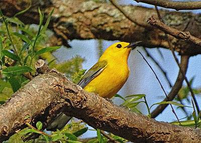 Warbler Photograph - Prothonotary Warbler II by Sandy Keeton