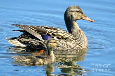 Photograph - Proud Duckling by Frank Townsley