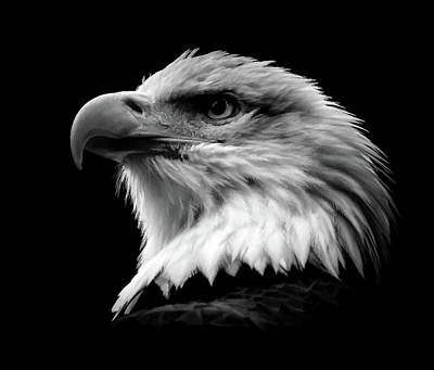 Photograph - Proud Eagle Bw by Athena Mckinzie