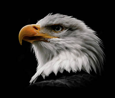 Photograph - Proud Eagle IIi by Athena Mckinzie