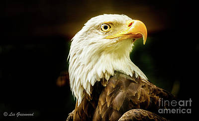 Photograph - Proud Eagle by Les Greenwood