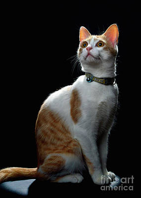 Photograph - Proud Kitty by Mark Miller