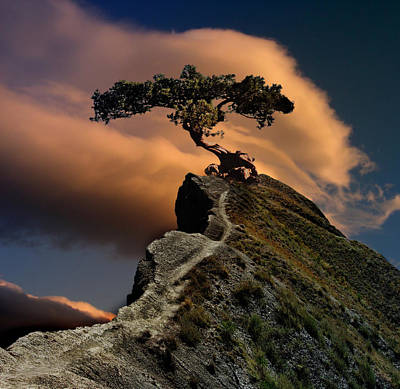 Bonsai Rock Photograph - Proud, Lonely, Alive by Yuri Hope
