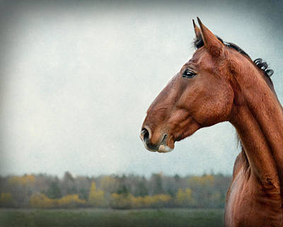 Gelding Photograph - Proud by Maggie Terlecki