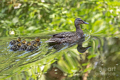 Photograph - Proud Mama by Kate Brown