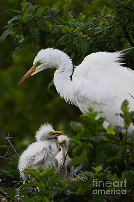 Photograph - Proud Mom  by Kathy Gibbons