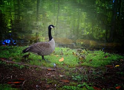 Photograph - Proud Mother Goose by Maria Urso