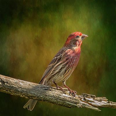 Finch Digital Art - Proud Mr Finch On Perch by Bill Tiepelman