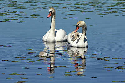 Abstract Works - Proud Parents by Debbie Oppermann