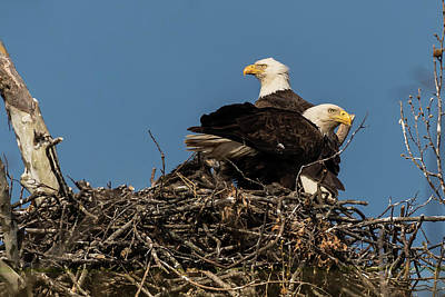 Photograph - Proud Parents by Linda Shannon Morgan