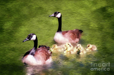 Goose Digital Art - Proud Parents by Lois Bryan