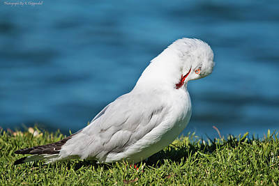 Digital Art - Proud Seagull 09 by Kevin Chippindall
