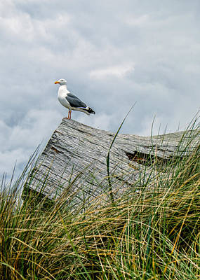 Photograph - Proud Seagull by Dick Wood