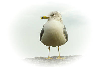 Photograph - Proud Seagull by Garvin Hunter