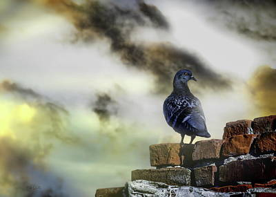 Framed Inspirational Wildlife Photograph - Proud To Be A Pigeon by Bob Orsillo