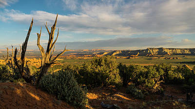 Photograph - Proud Tree Grand Stairway-escalante National Monument Utah by Lawrence S Richardson Jr