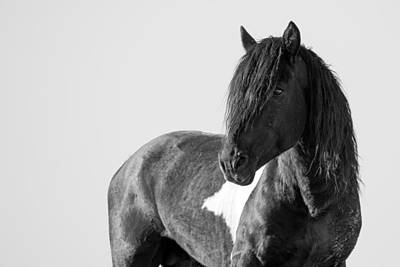 Forelock Photograph - Proud Warrior by Sandy Sisti