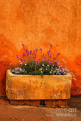Photograph - Provencal Melody by Olivier Le Queinec