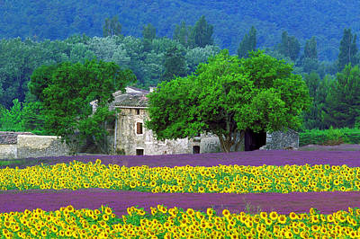 Photograph - Provence by John Galbo