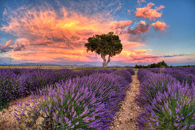 Photograph - Provence by Karim SAARI